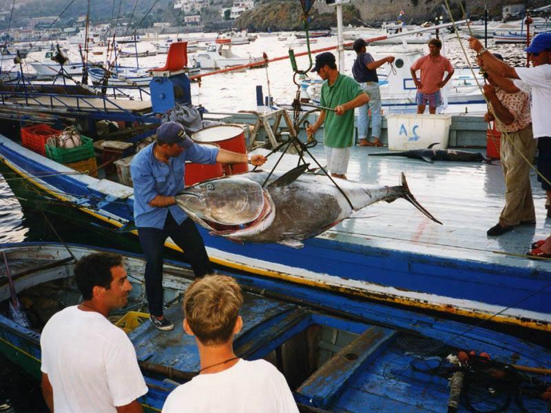 Pesca,  stato di agitazione delle marinerie siciliane