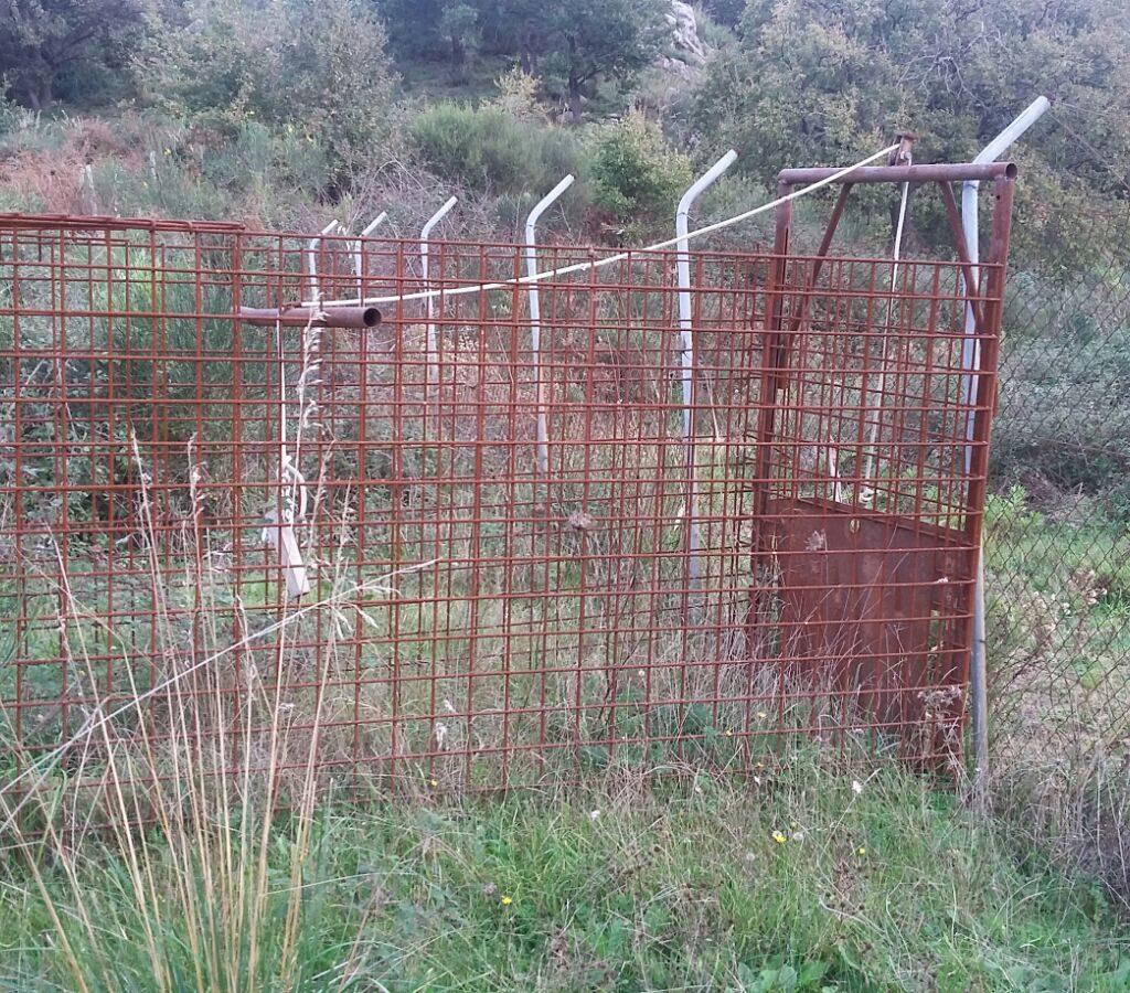 San Piero Patti, sequestrata una gabbia a ghigliottina per la cattura dei cinghiali