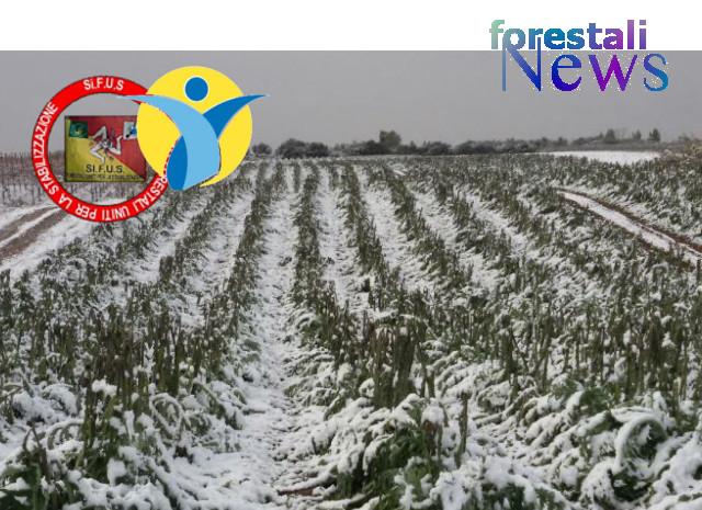 Chiesto la stato di calamità per il settore agricolo catanese