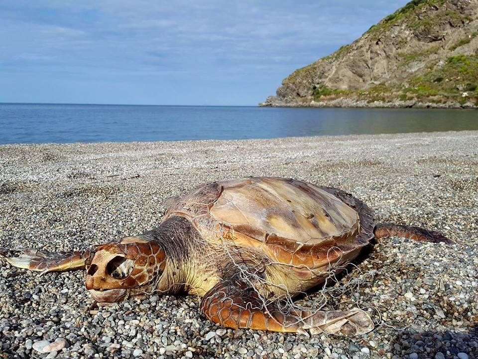 Milazzo/ Tartaruga morta trovata sulla spiaggia del Tono