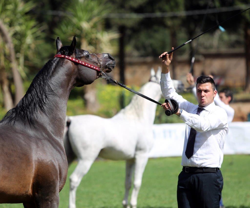 Palermo Arabian Horses Cup 2017 nei giorni 1 e 2 Aprile a Palermo