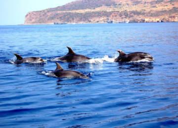 Guerra del Totano alle Eolie, dissuasori contro i delfini