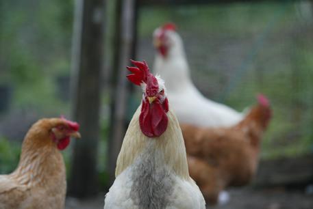 Agrigento/ Rompono vasi e uccidono galline, denunciati