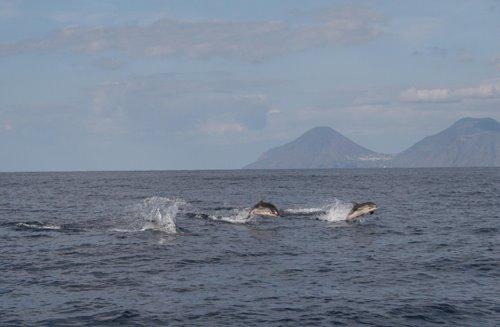 Delfini, tartarughe e capodogli nel mare delle isole Eolie
