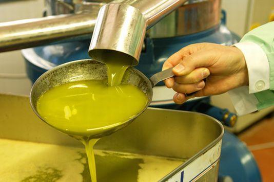 Coltivazione dell'olivo: Sicilia regione favorita con un fatturato da 240 mln di euro