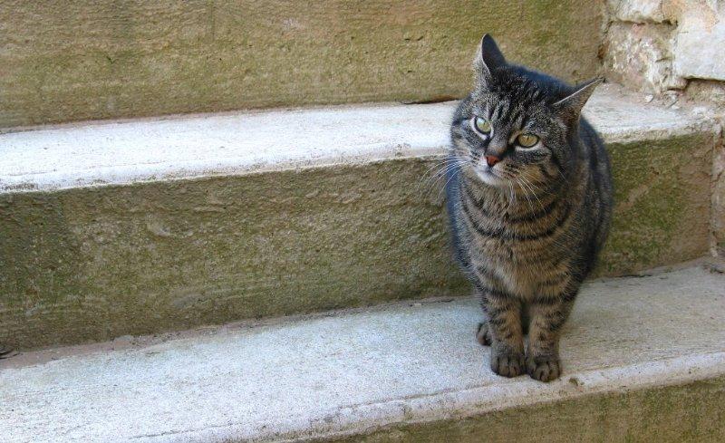 Uccide gatto con carabina aria compressa
