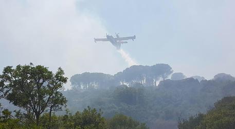 Incendio in riserva Zingaro, ustionato forestale