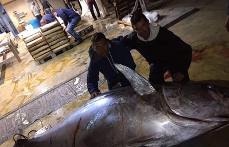Milazzo/ Pescano tonno di 380 chili con una lenza ed una barca da 5 metri