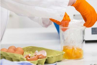 In arrivo bollino 'fipronil free' sulle uova italiane