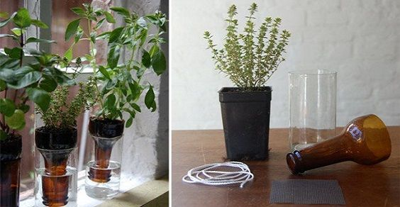 Studenti universitari inventano il… vaso auto innaffiante