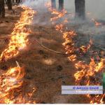 Avviati una parte di Forestali. I sindacati aspettano il confronto con Musumeci in settimana