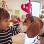 Gli animali domestici in casa difendono i bambini dalle allergie