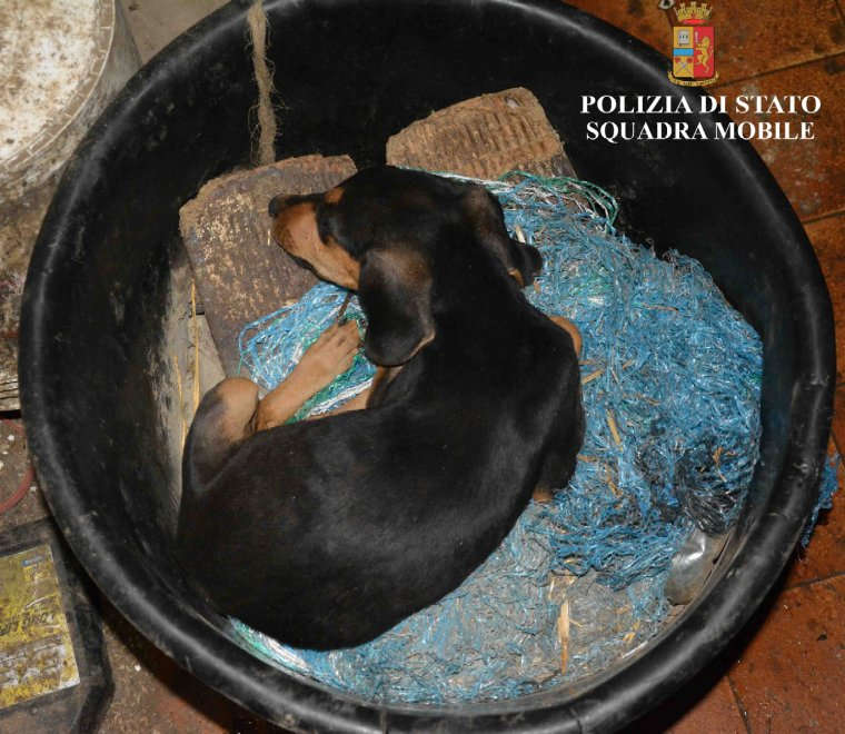 Ragusa, salvati dieci cani maltrattati in una masseria