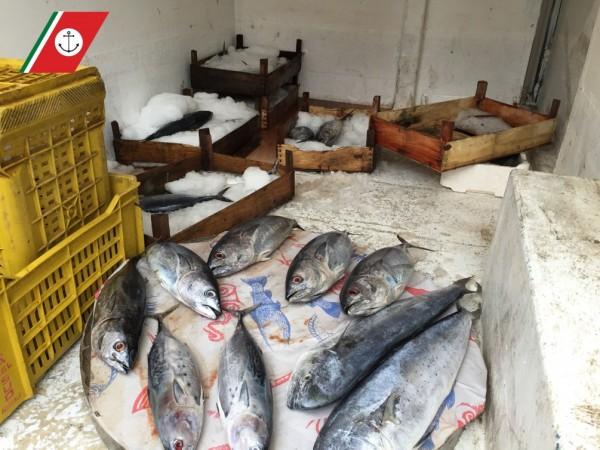 Barcellona: sequestrati 31 kg di pesce