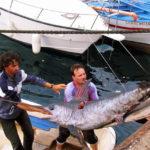 Quote pescespada, penalizzano la Sicilia