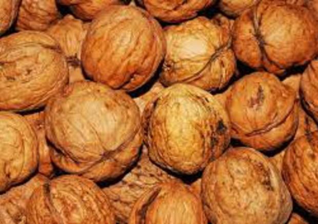 In un pugno di noci o noccioline l'elisir per il cuore, anche anti tumore