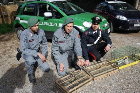 300 cardellini liberati a Palermo, due denunce
