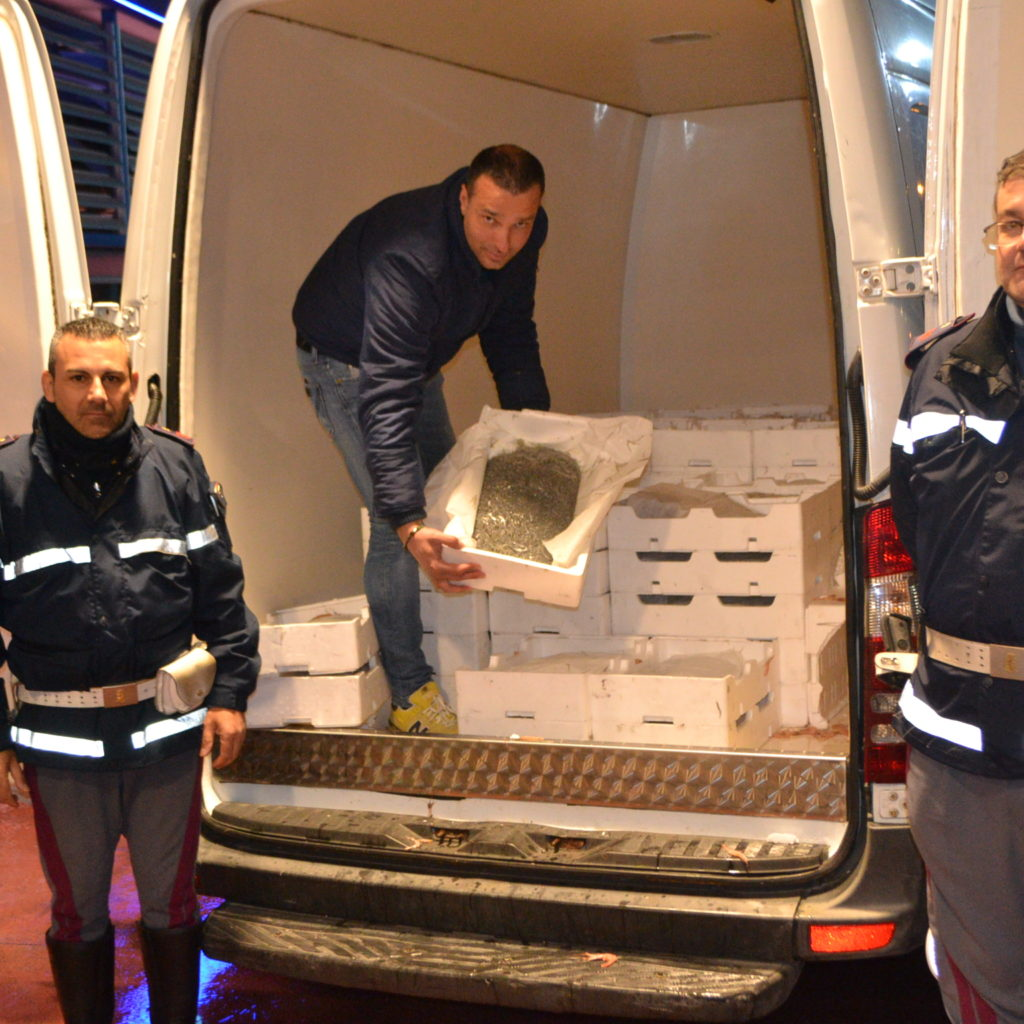 Milazzo, sequestrati 1500 chili di novellame