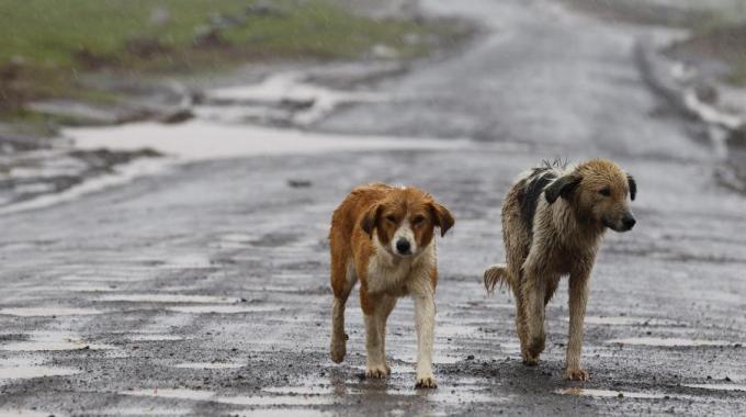"""Problema randagismo in provincia, Scilipoti: """"tutelare gli animali"""""""