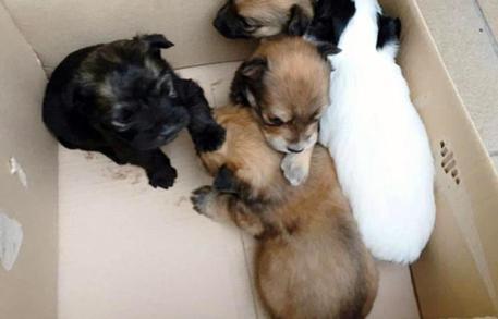 Assessore lascia cuccioli di cane davanti villa, video lo accusa