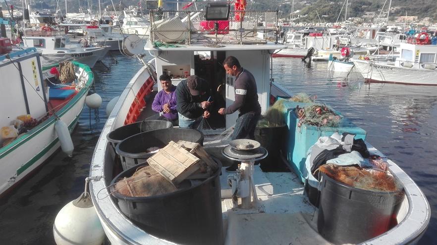 Ancora delfini, riprende la protesta dei pescatori eoliani