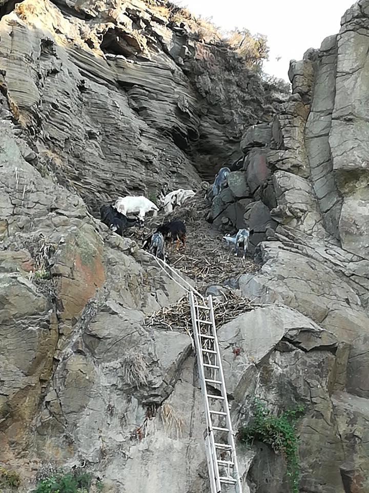 Vulcano/ 32 capre finiscono in una scarpata. 25 salvate 7 morte