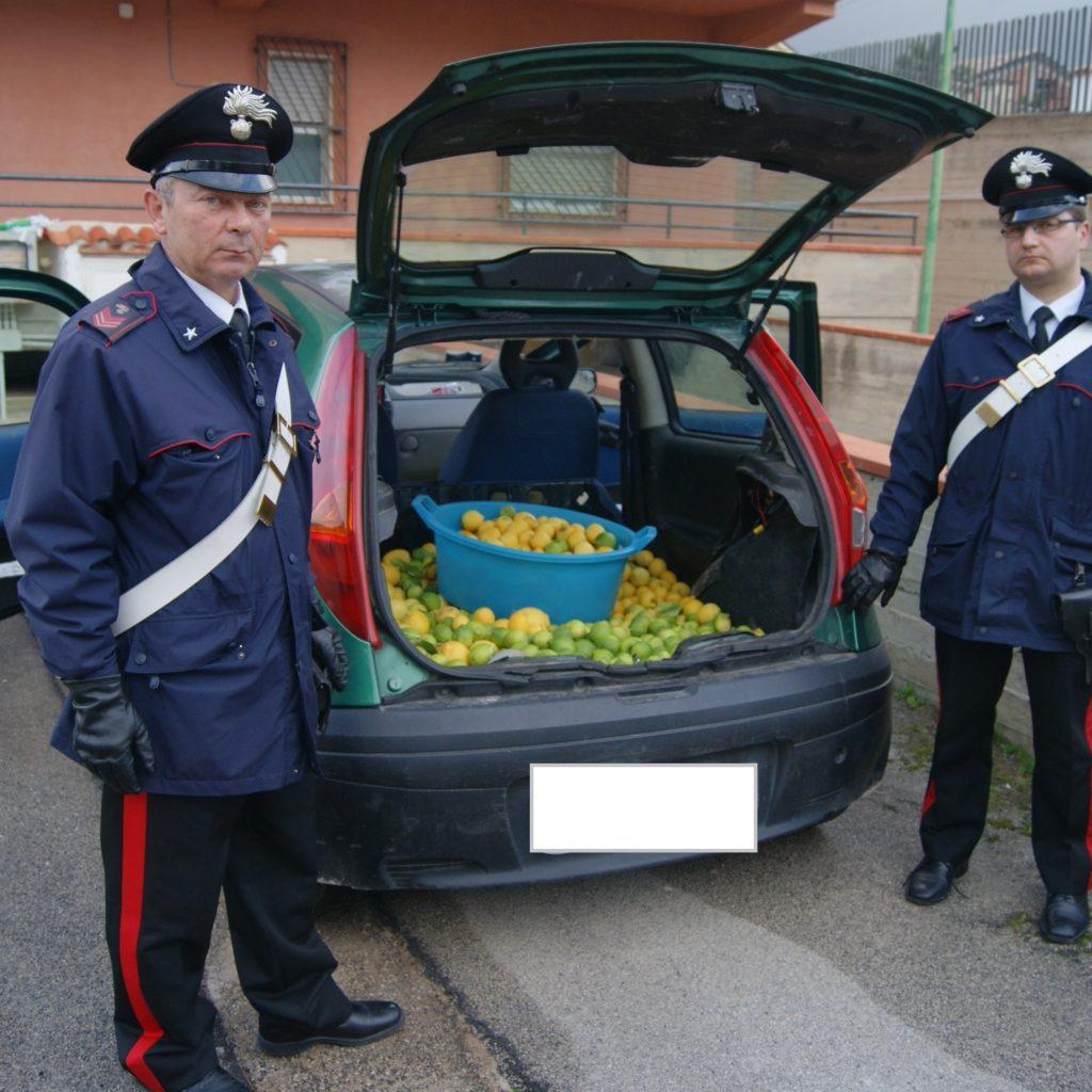 Rubano oltre 200 chili di limoni di qualità pregiata, tre persone in manette