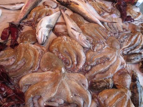 Pesca,a Mazara firmato accordo con Libia