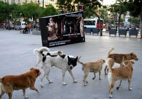 Cani avvelenati a Sciacca, 2 sospettati