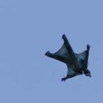 Si lancia da viadotto con wingsuit,muore
