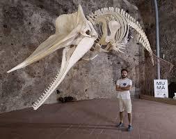 Sabato 18 Gennaio al Museo del Mare Milazzo, presso il Castello di Milazzo, ci sarà una conferenza sui cetacei