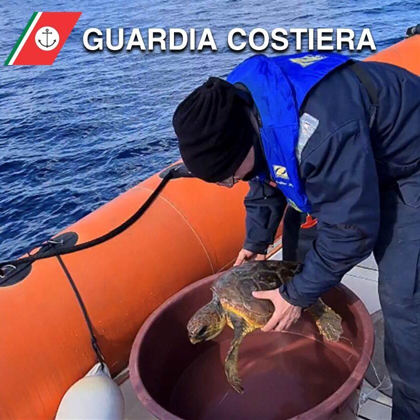 La Guardia Costiera di Milazzo soccorre una tartaruga ferita